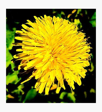 Kat's Gold Sunshine Photographic Print