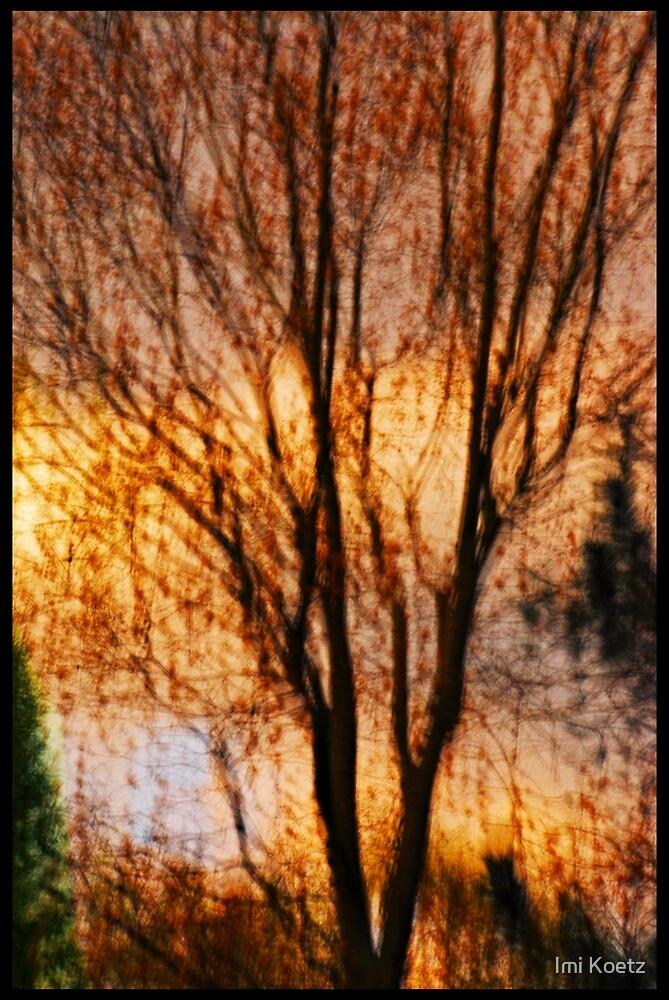 Artscape........One Tree by Imi Koetz