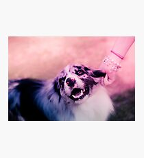 princess puppins Photographic Print