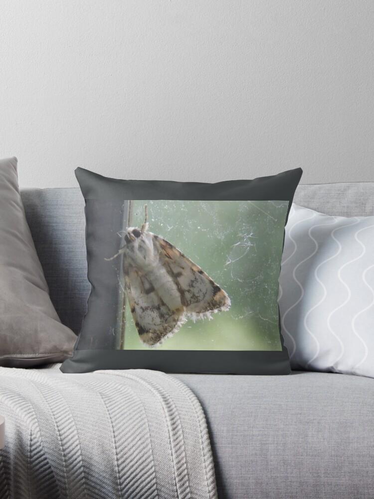 Cute Moth on the Dusty Pane by DeneWest