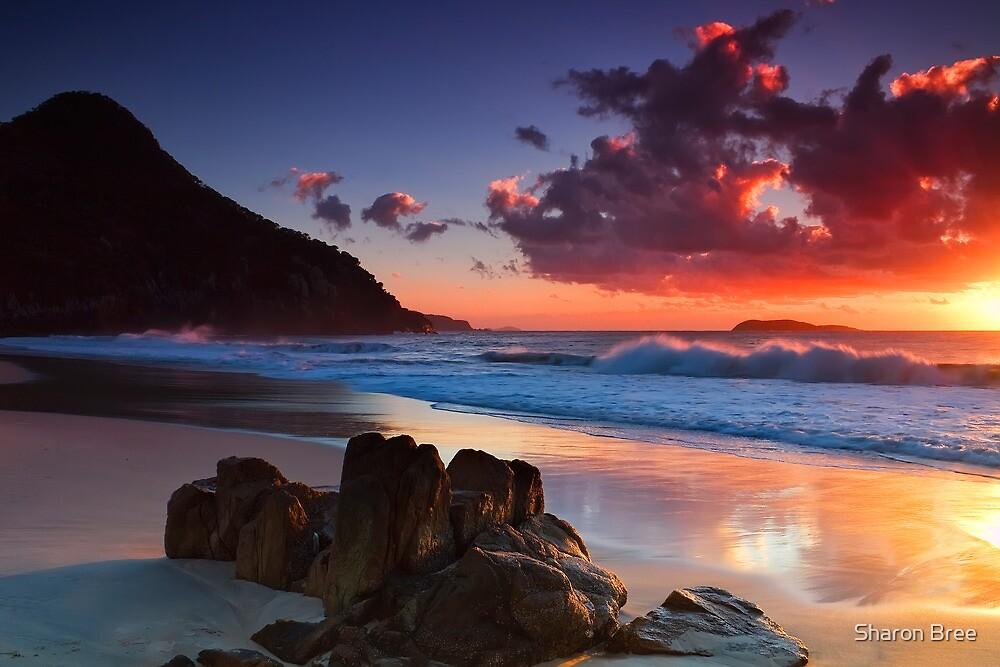 Zenith Beach Sunrise by Sharon Bree