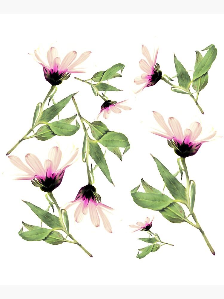 Rosa Romantik blühen von RanitasArt