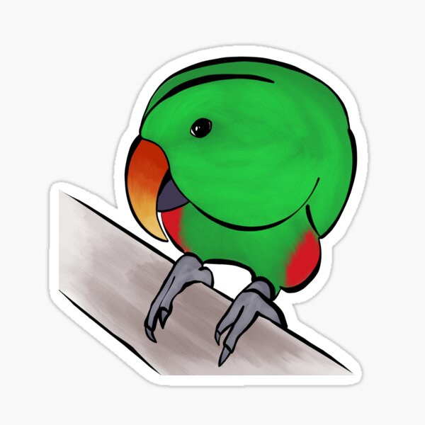 Curious Eclectus Sticker