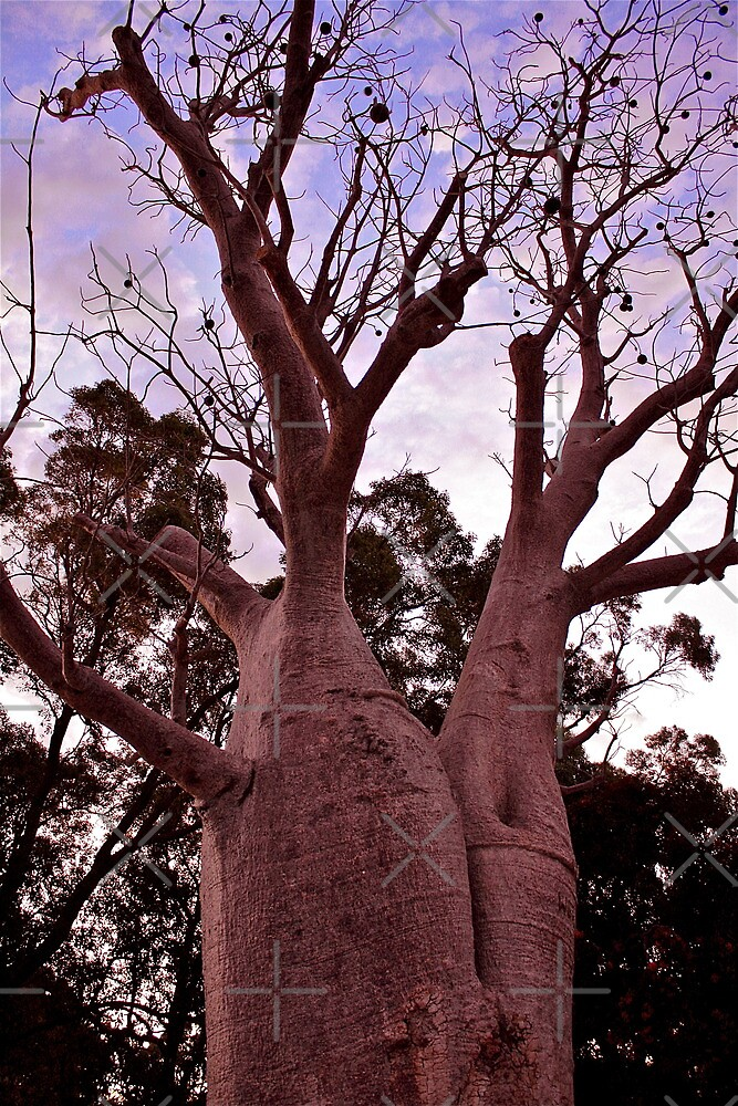 Boab Tree, Western Australia by Cindy Ritchie