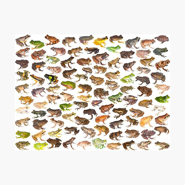 101 Frogs of Madagascar, First Edition Photographic Print