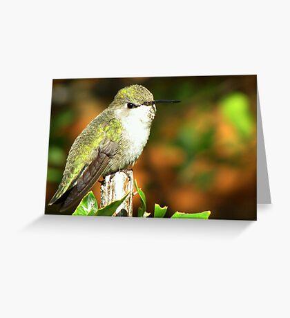 Hummingbird ~ Costa's (Female) Greeting Card