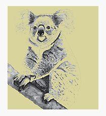 Koala Black and White Photographic Print