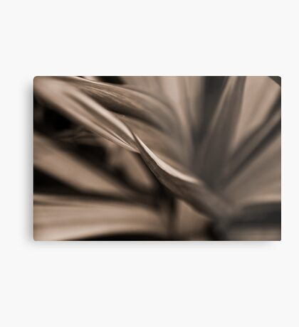 Impression Sepia Fern: On Featured: Sepia-only Group Metal Print
