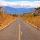 Guanacaste Road by Nickolay Stanev