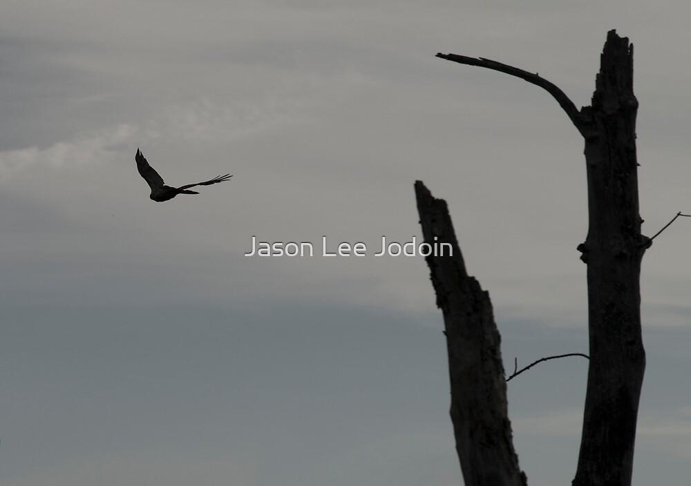 Hawk Bye by Jason Lee Jodoin