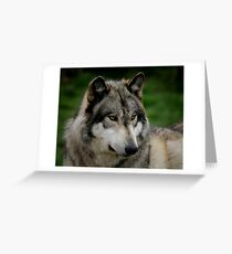 A WOLF PORTRAIT Greeting Card