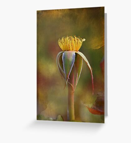 The Naked Rose Greeting Card