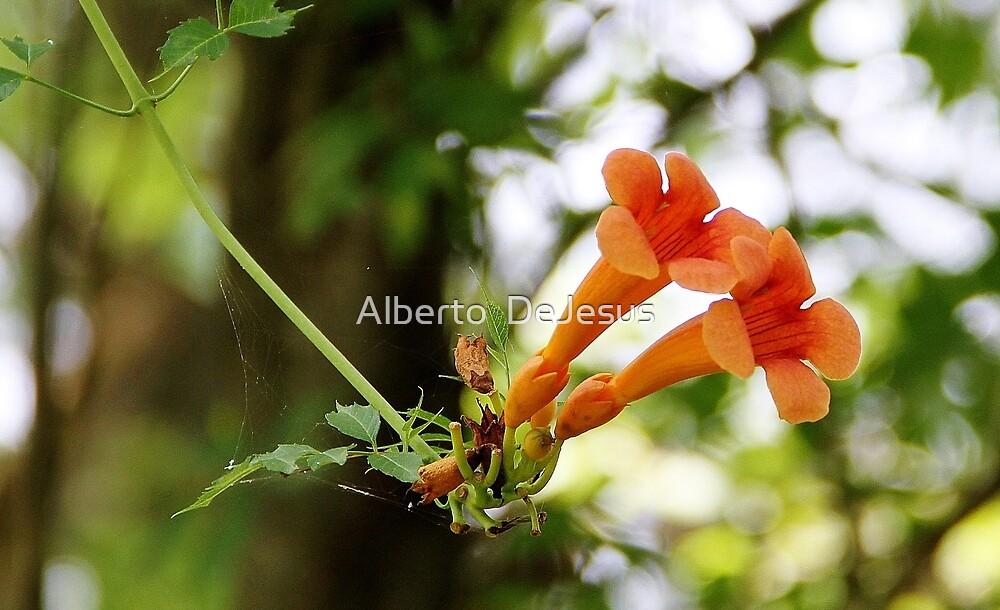 Orange Blossoms by Alberto  DeJesus
