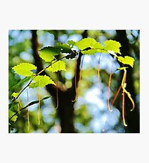 Summer Foliage Photographic Print