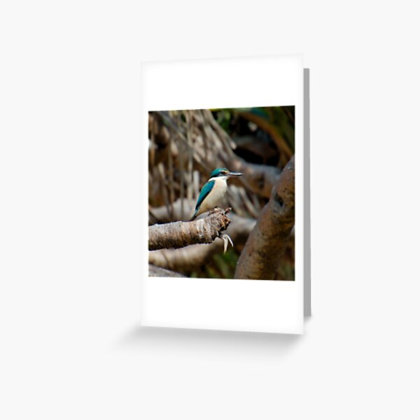 KINGFISHER ~ SC ~ WO ~ Sacred Kingfisher by David Irwin 031019 Greeting Card