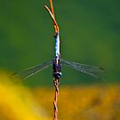 Dragon Fly - Hong Kong Park by Richie Wessen