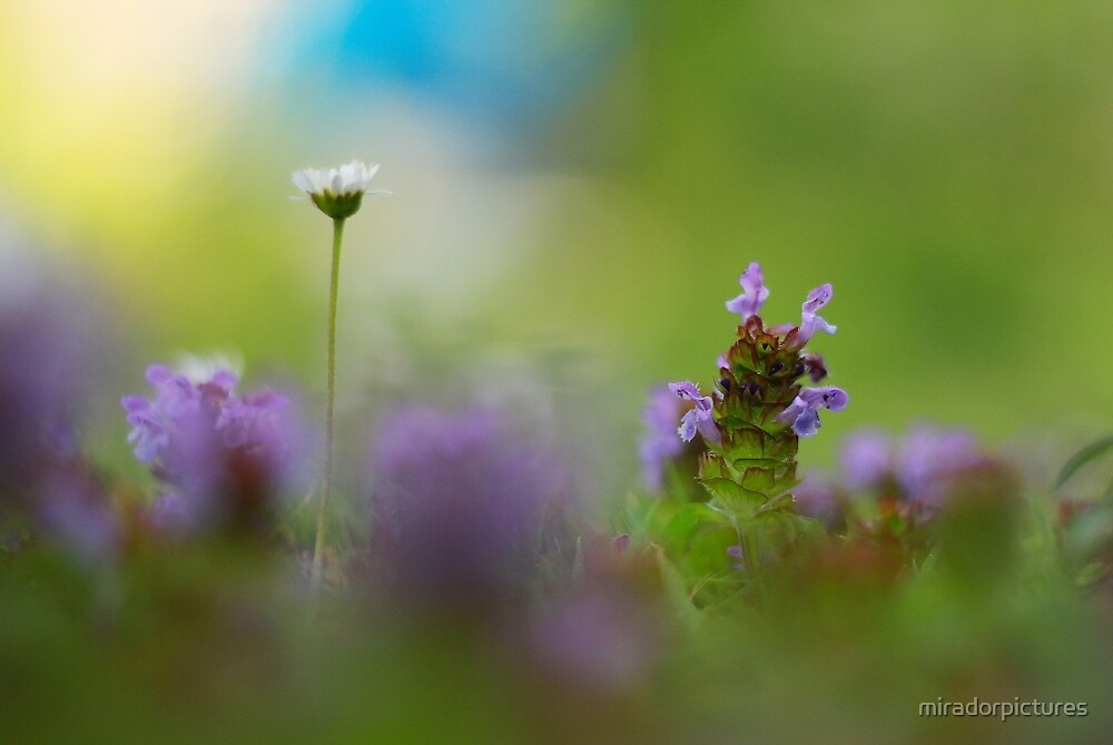 A summer lawn by miradorpictures