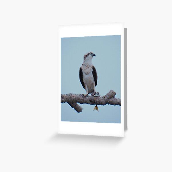 RAPTOR ~ SC ~ Eastern Osprey by David Irwin 031019 Greeting Card