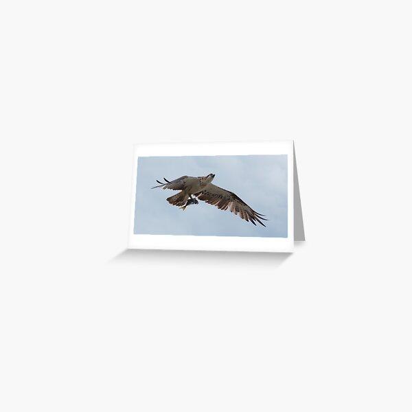 RAPTOR ~ SC ~ Eastern Osprey 2 by David Irwin 031019 Greeting Card