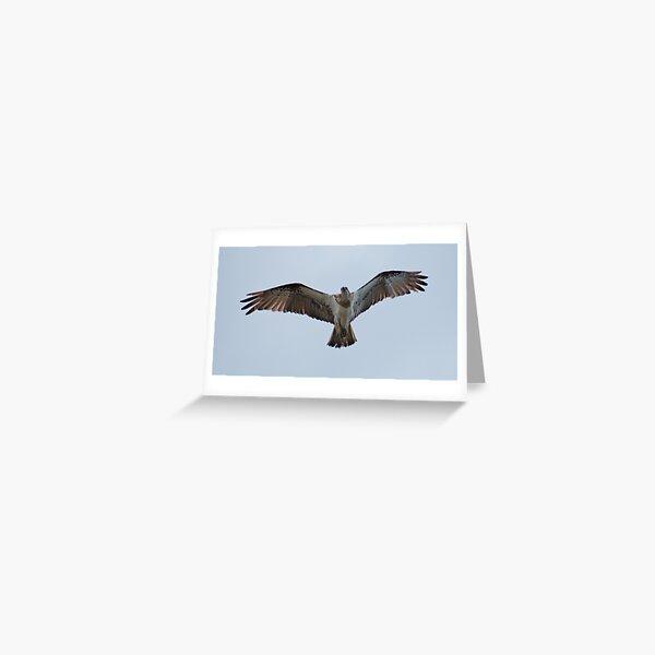 RAPTOR ~ SC ~ Eastern Osprey 3 by David Irwin 031019 Greeting Card