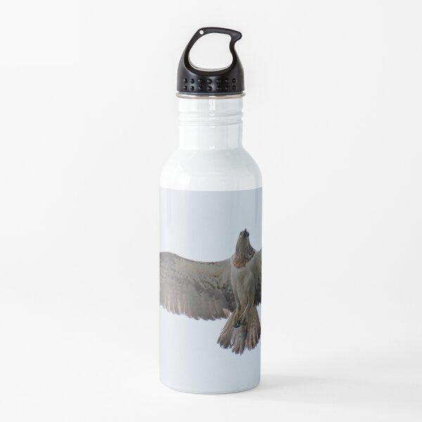 RAPTOR ~ SC ~ Eastern Osprey XLCFPHJ4 by David Irwin 031019 Water Bottle