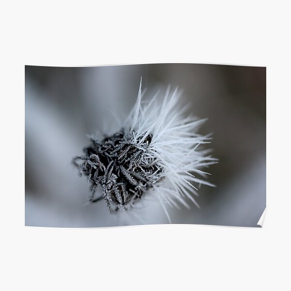 black and white lace Poster
