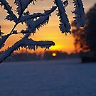 Iceflowers at sunset by heinrich