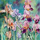 Multicoloured Irises  by Ann Mortimer