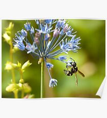 Macro-Insects Poster