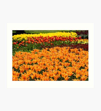 Colorful Tulip Garden Art Print