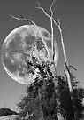 What Stirs beneath a Full Moon by John Bullen