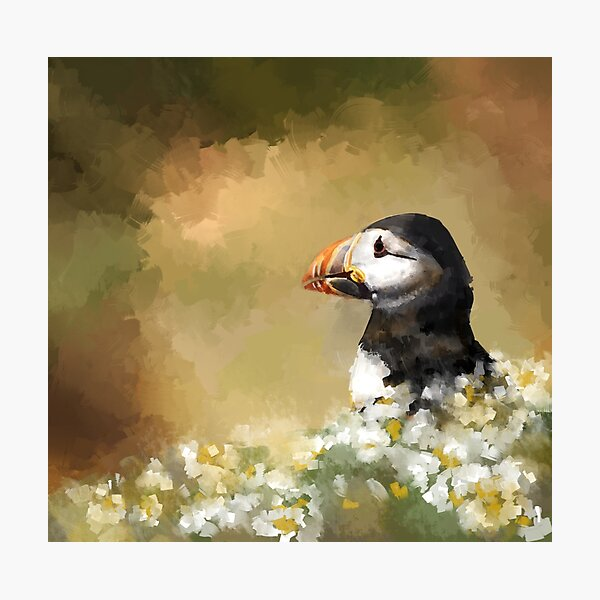 Puffin in the daisies Photographic Print