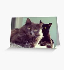 cats grey and black / photo Greeting Card