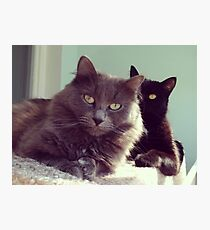 cats grey and black / photo Photographic Print