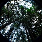 Canopy by Clayton Bruster
