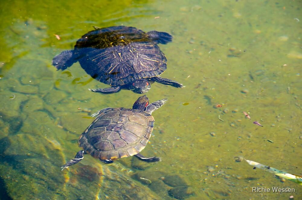 Turtle Conversation - Hong Kong Park by Richie Wessen