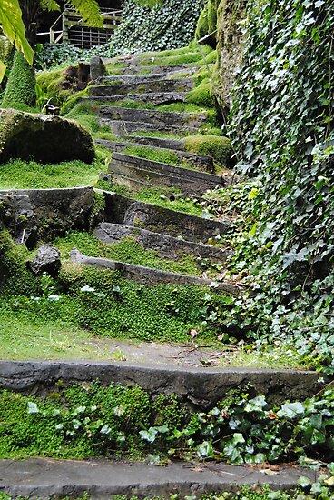200yr old stone steps - Umpherston Sinkhole - Mt Gambier, South Australia by Heather Samsa