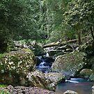 Cave Creek below Natural Arch by Odille Esmonde-Morgan