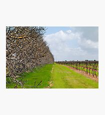 The Vineyard - Naracoorte, South Australia Photographic Print