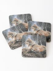 Grey wolf in front of a waterfall Coasters