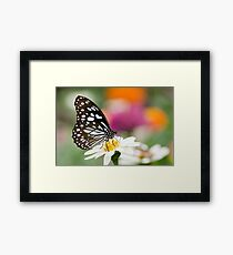 Blue Tiger Butterfly Framed Print