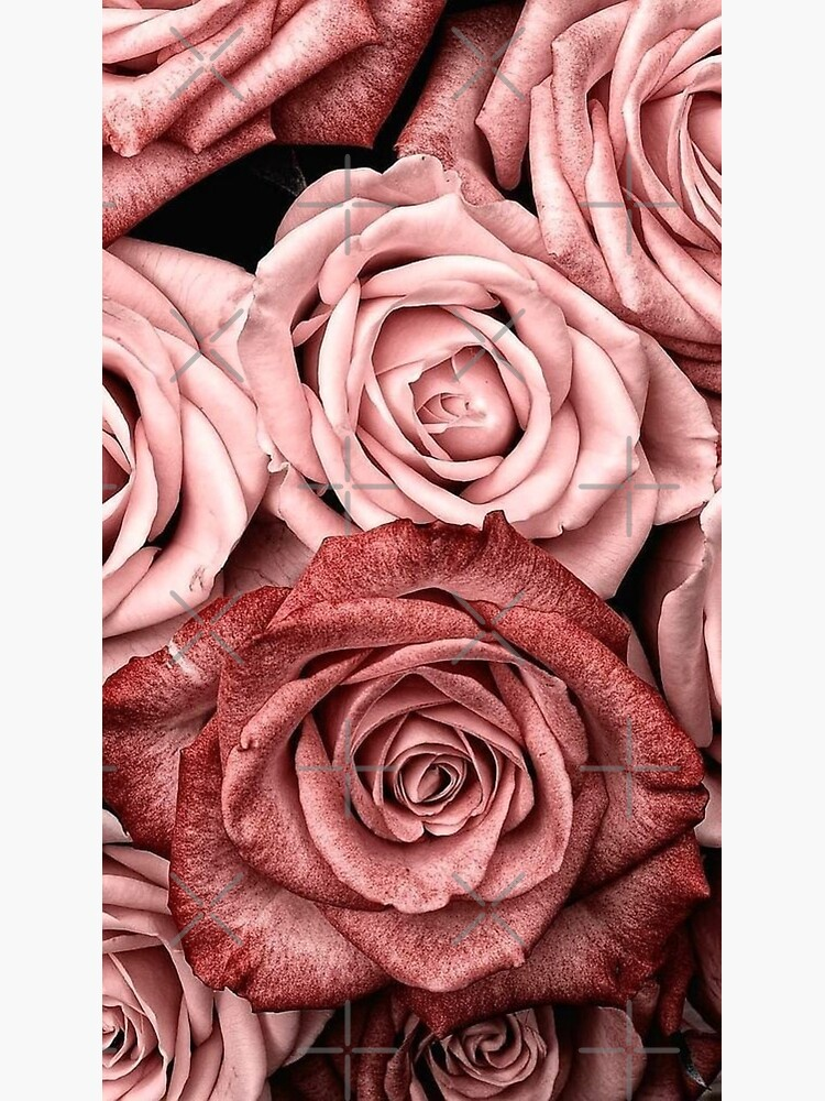 Vintage roses by Medly
