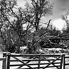 Wee Gate BW by greigsy