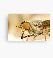 Tabanidae - March Fly Canvas Print