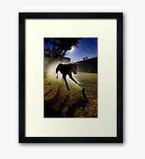 Dogs with game face on .20 Framed Print