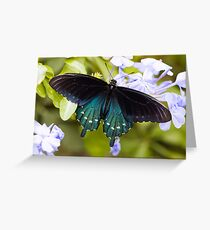 Pipevine, Swallowtail Butterfly Greeting Card