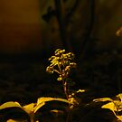 Undergrowth by Akash Puthraya