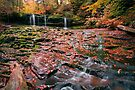 More Moss And Autumn Leaves Than Water by Gene Walls