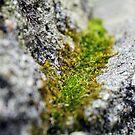 brick moss by shootinglife
