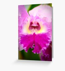 Bi-Color Cattleya Orchid Greeting Card